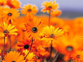 indahnya bunga di taman...