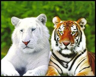Las 10 principales especies en peligro de extinción  - imagenes de animales en peligro de extincion con sus nombres