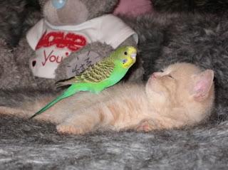 http://2.bp.blogspot.com/_t9bWXGsleFo/SX5z1wwymQI/AAAAAAAAAUg/wqYOah97KLg/s320/cat+and+canary.jpg