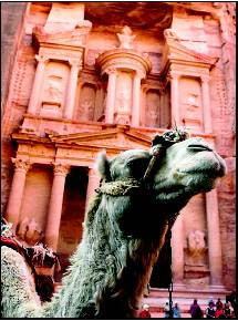 A camel stands outside the treasury site in Petra, Jordan