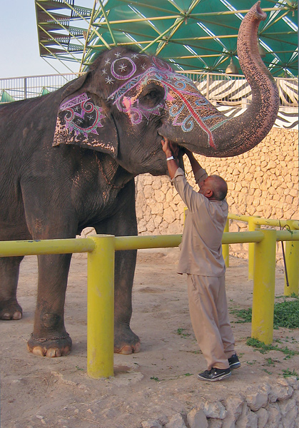 Indian Elephant Examination