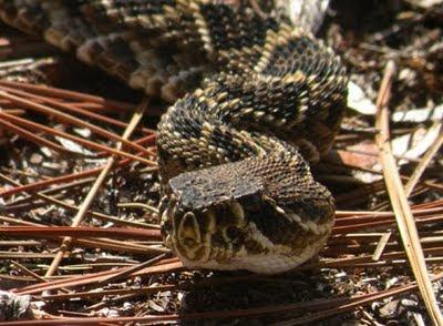 http://2.bp.blogspot.com/_tB6Y4JXc7kw/SuZkFNQllKI/AAAAAAAADVg/ILweXGknO5E/s400/Snake2.JPG