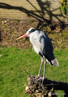 heron in sun