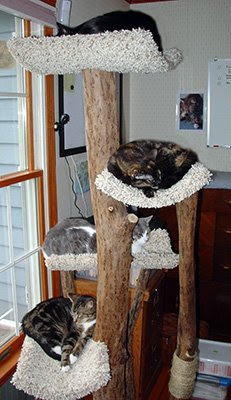 Four cats in the tree