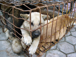 comprar un animal es matar a otro