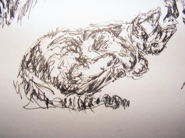 [catsar4]