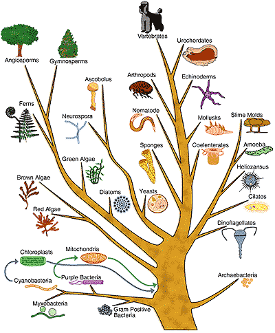 tree of life evolution. tree of life evolution.