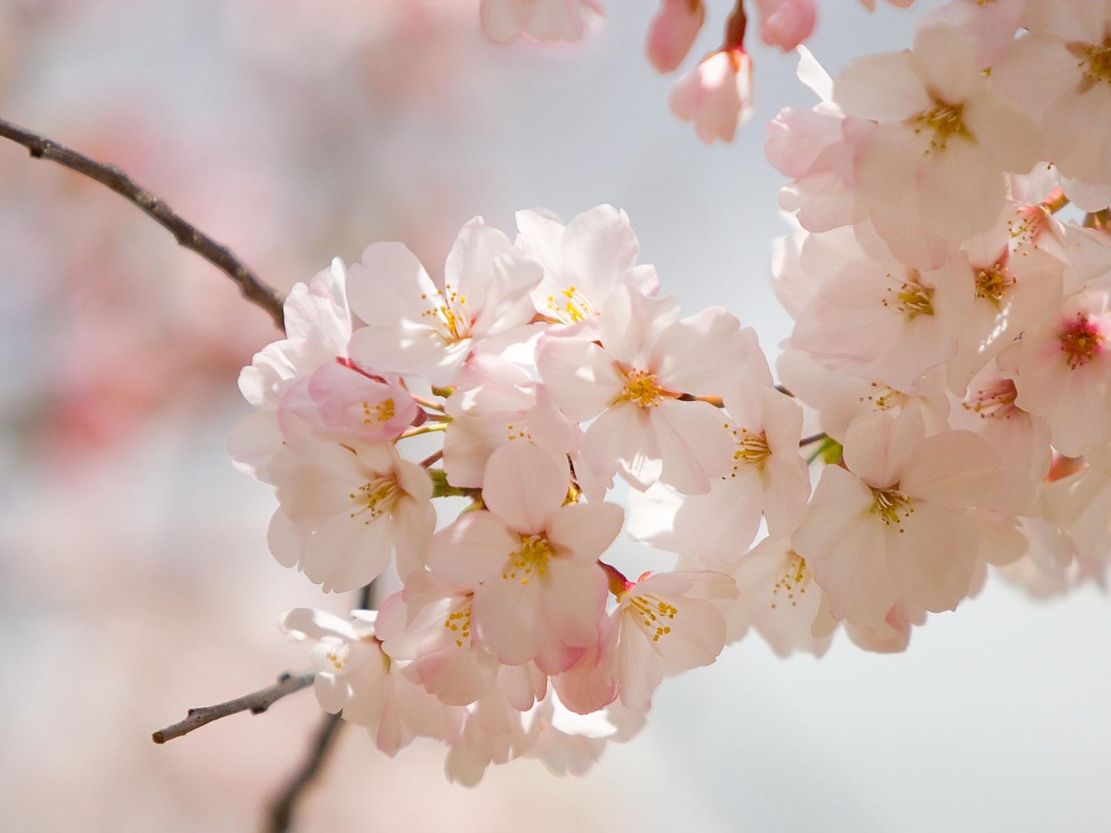 http://2.bp.blogspot.com/_tHKnABwG90g/TNFX0V2ZcbI/AAAAAAAAAFU/Ad8S9HtdkG0/s1600/spring-wedding-flowers%5B1%5D.jpg