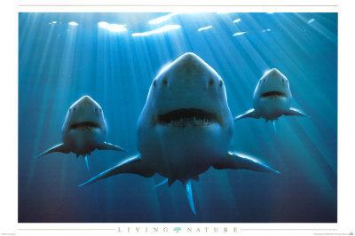 13. Indonesia memiliki species ikan hiu terbanyak didunia yaitu 150