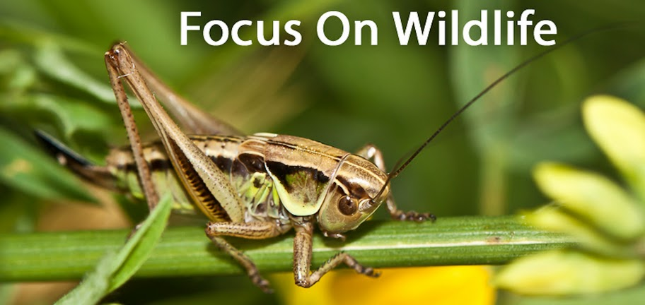 Focus On Wildlife
