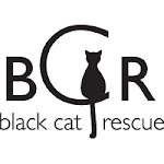 Did you know that black cats are only half as likely to get adopted as cats of other colors?