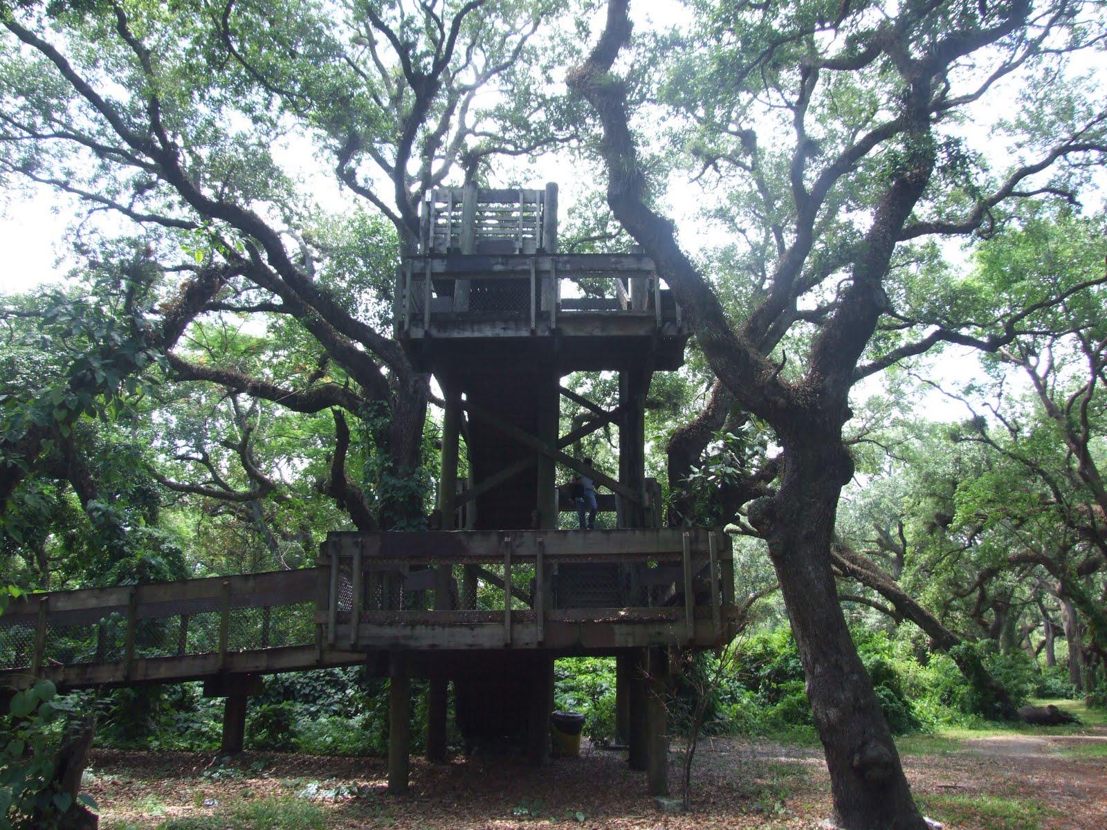 Pine Island Ridge Trail Davie Fl