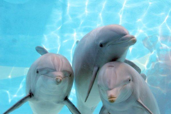 http://2.bp.blogspot.com/_tNstz_teU0o/TBH8aIiqS1I/AAAAAAAAB3w/6PFl4i8ABC4/s1600/Delphins7.jpg