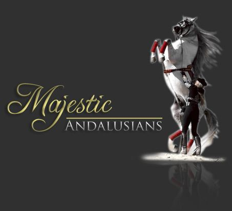 1000  images about Majestic Andalusians on Pinterest | Facebook ...