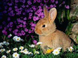 Es un mundo tan interesante y emocionante el de los animaless
