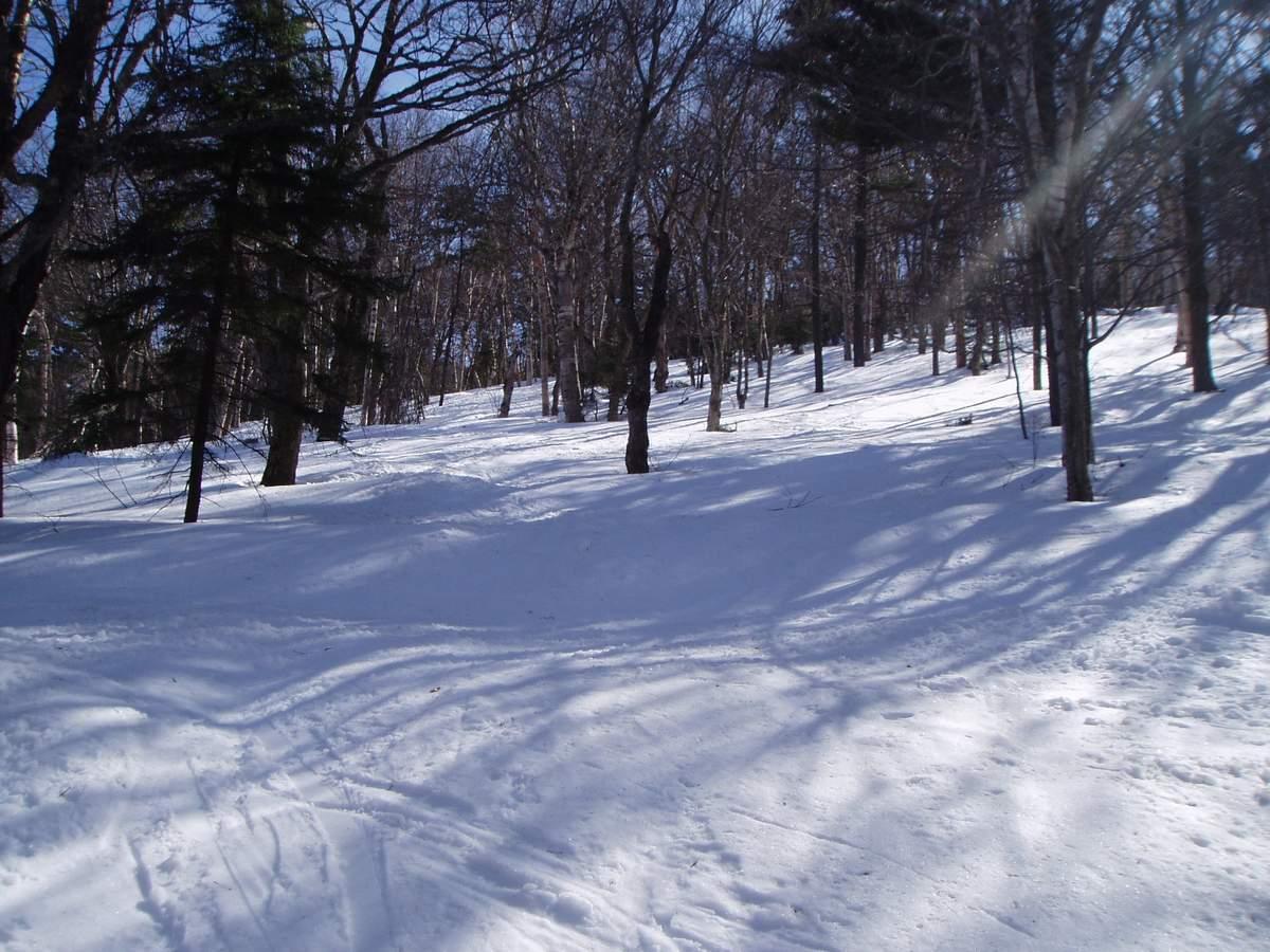http://2.bp.blogspot.com/_tPGLufUH47U/TMtPfOUVXHI/AAAAAAAAAxo/0teKOs23Q0w/s1600/North%2BSide%2BTrees.JPG
