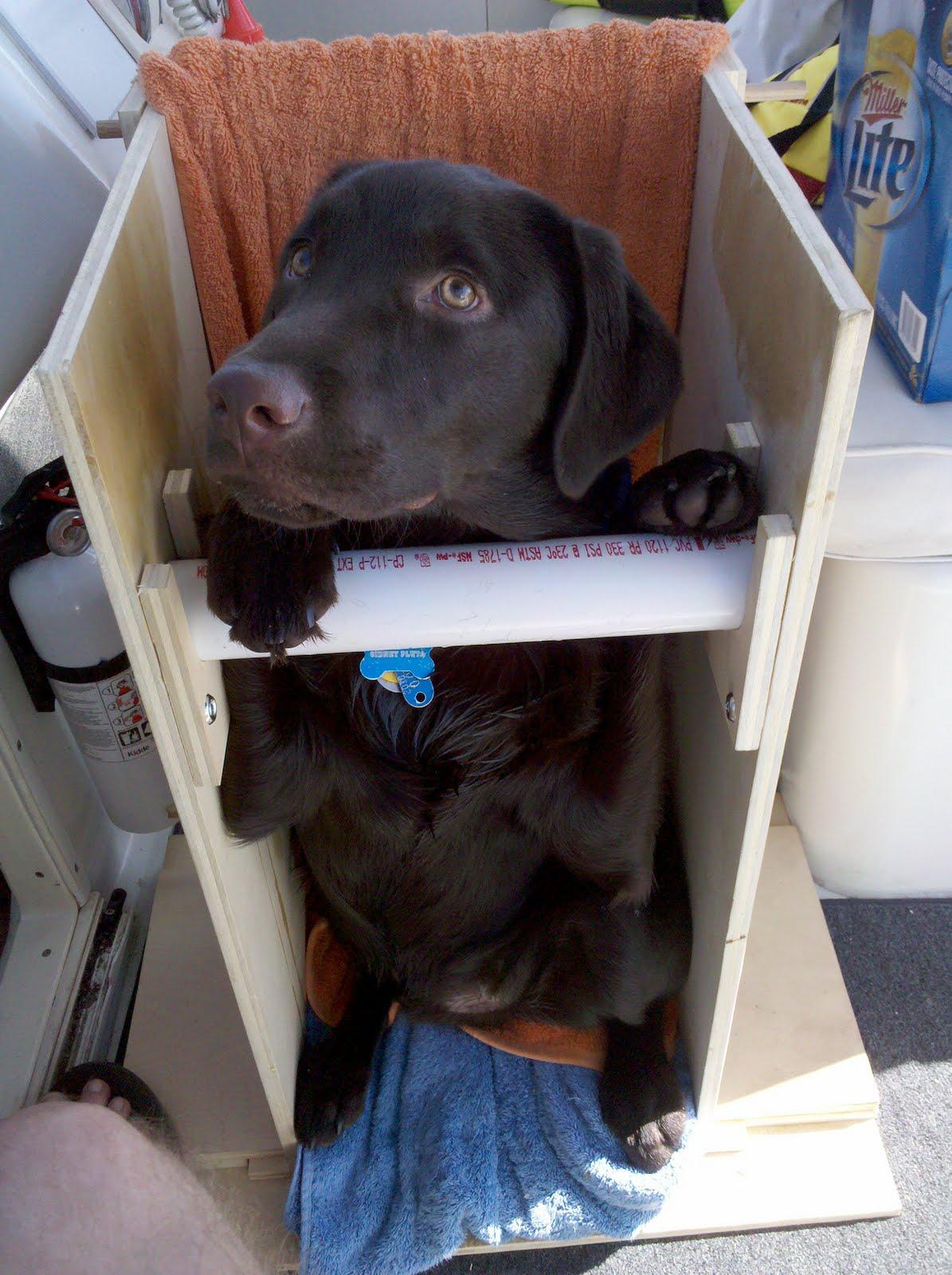 Portable Bailey Chair & Canine Megaesophagus: Portable Bailey Chair