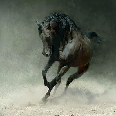 arabian horse wallpaper. brown Arabian Horse