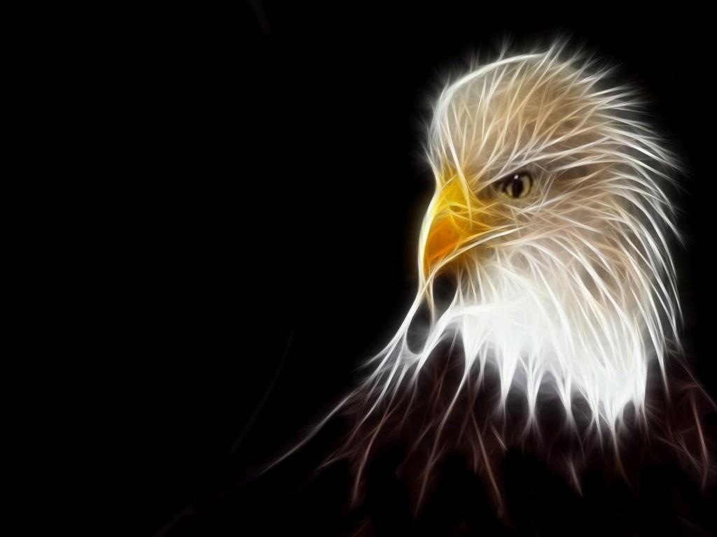 http://2.bp.blogspot.com/_tR4ydijURnA/TIdOaHq0ftI/AAAAAAAAB4k/Yk5K2ZWTem4/s1600/Eagle-1.jpg
