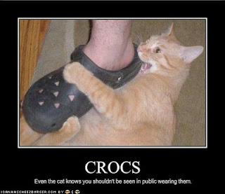 Até gatos sabem que você não deve usar sandálias crocs na rua