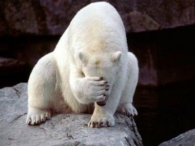 http://2.bp.blogspot.com/_tT91V6M2VRU/TForuug39sI/AAAAAAAAAAM/Ha3IDO7iUFc/s1600/polar-bear-face-palm-thumbnail.jpg
