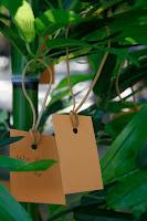 Deseos en el bambú del Tanabata pedidos a las estrellas, el mío era muy obvio: quiero un cerebro que funcione!!