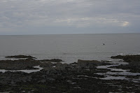Dolphins at Aberystwyth