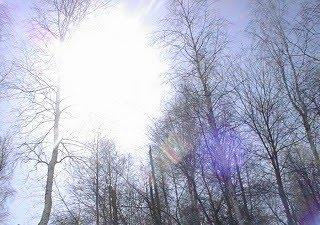 зимното слънчице