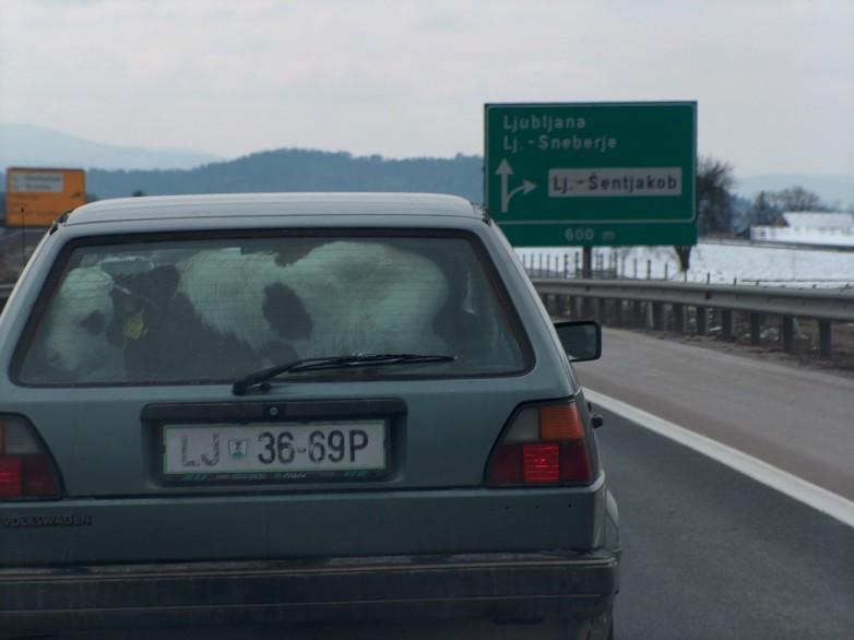 [Immagine: 0b5csvy-transport6.jpg]