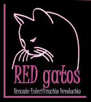 RED Gatos
