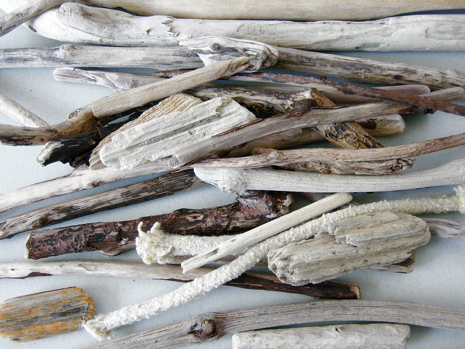 Drift wood shaped by the water pinterest for Driftwood wall