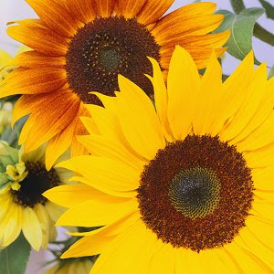 sunflower wedding reception flowers
