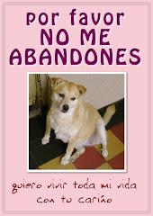 No al abandono de animales