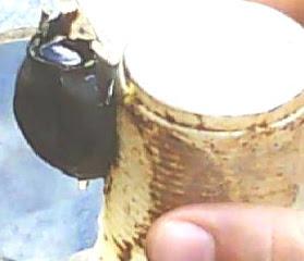 Pote de mel grudado no copo
