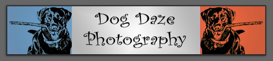 Dog Daze Photography