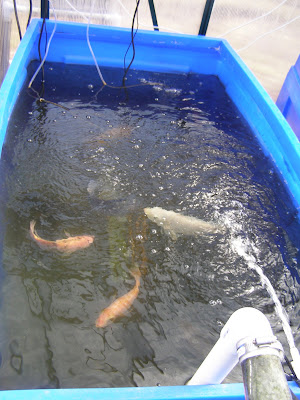 Fish  Farm on Fish Farm 1 31 08  6  Jpg