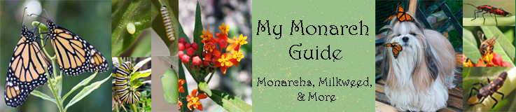 My Monarch Guide: Monarch Butterfly Milkweed Mania!