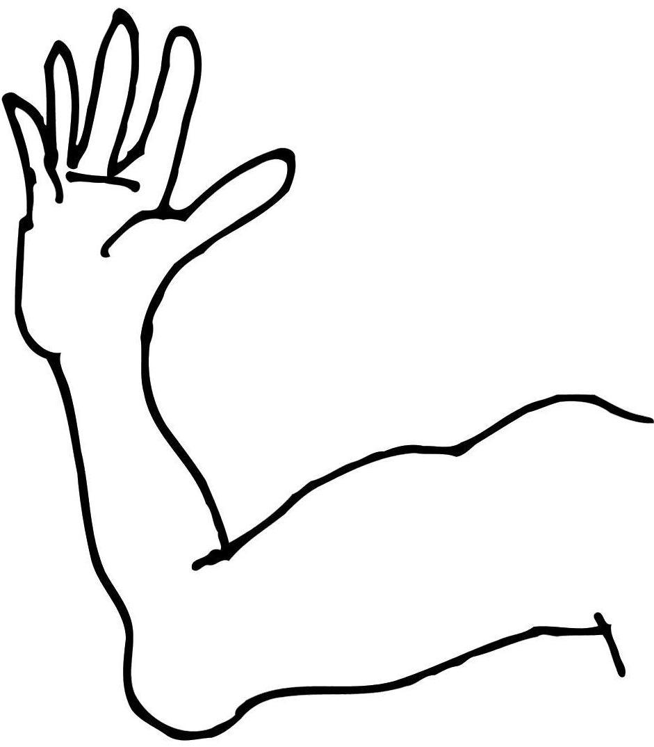 Dibujos del brazo y sus partes
