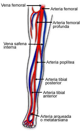 partes de la pierna: