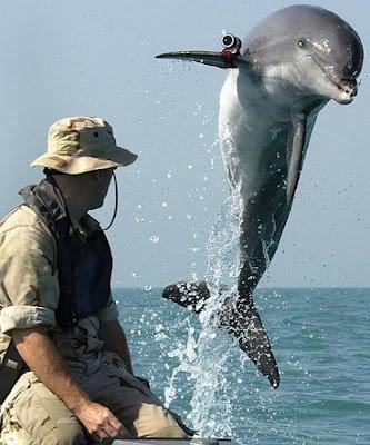 Dolphin Rambo