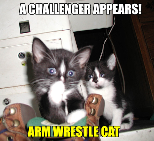 A CHALLENGER APPEARS! ARM WRESTLE CAT