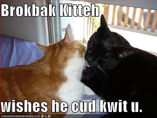 Brokbak Kitteh wishes he cud kwit u.
