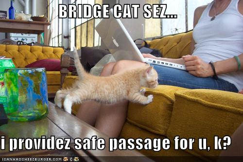 BRIDGE CAT SEZ... i providez safe passage for u, k?