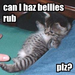 can I haz bellies rub plz?