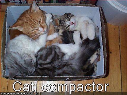 Cat compactor