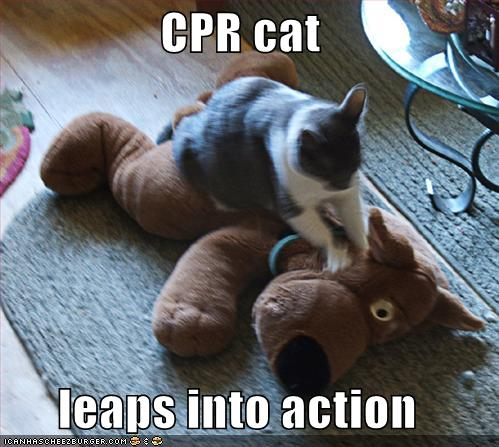 CPR cat leaps into action