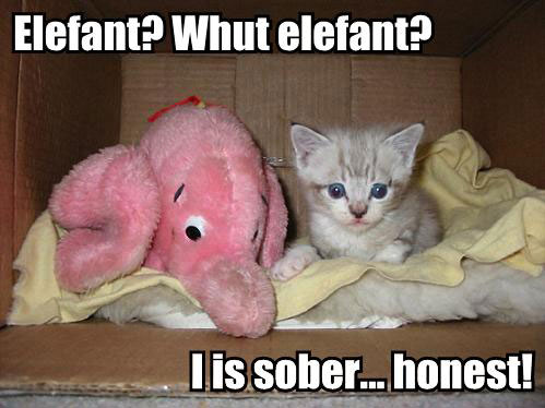 Elefant? Whut elefant? I is sober... honest!