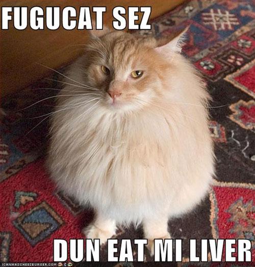FUGUCAT SEZ DUN EAT MI LIVER