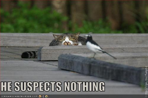 HE SUSPECTS NOTHING