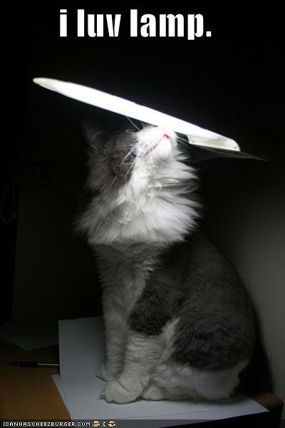 i luv lamp.